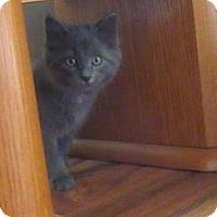 Adopt A Pet :: Royal Crown - Rochester, MN