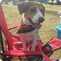 Adopt A Pet :: Doug - St. Francisville, LA