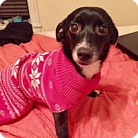 Adopt A Pet :: Bandit - New York, NY