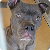 Adopt A Pet :: Jackson - Cumming, GA