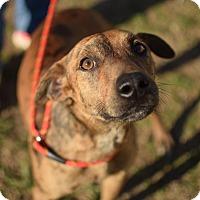 Adopt A Pet :: Rudy - Manchester, CT