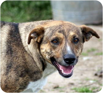 Beagle/Hound (Unknown Type) Mix Dog for adoption in Glenpool, Oklahoma - Tigger