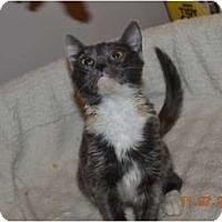 Adopt A Pet :: Violet - McDonough, GA