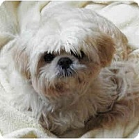 Adopt A Pet :: Kato - Pending - Vancouver, BC
