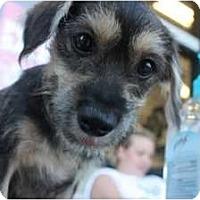 Adopt A Pet :: Colby - Arlington, TX