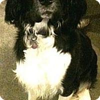 Adopt A Pet :: Luna - Wasilla, AK