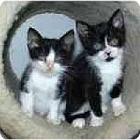 Adopt A Pet :: Tara & Tyler - Arlington, VA
