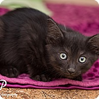 Adopt A Pet :: Jeremy - Fountain Hills, AZ