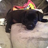 Adopt A Pet :: Baby Sadie - Marlton, NJ