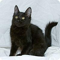 Adopt A Pet :: Yvette V - Sacramento, CA