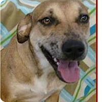 Adopt A Pet :: Donna - Springdale, AR