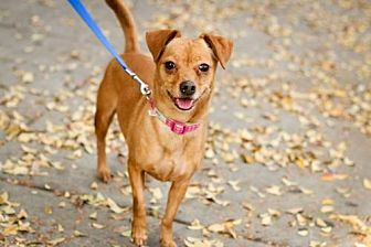 Terrier (Unknown Type, Medium) Mix Dog for adoption in Fresno, California - Holly