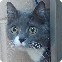 Adopt A Pet :: Georgia - Covington, KY