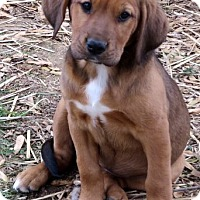 Adopt A Pet :: Bre~adopted! - Glastonbury, CT