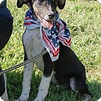 Adopt A Pet :: Laramie - Joliet, IL