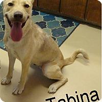 Adopt A Pet :: Tabina - Ozark, AL
