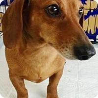 Adopt A Pet :: Kielbasa - Oswego, IL