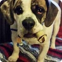 Adopt A Pet :: Charlie - Concord, OH
