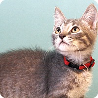 Adopt A Pet :: Jack (in CT) - Manchester, CT