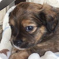 Adopt A Pet :: Devon Dabinett - Houston, TX