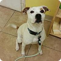 Adopt A Pet :: Allie - Reisterstown, MD