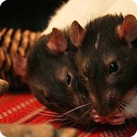 Adopt A Pet :: NEMO and JULES - Philadelphia, PA