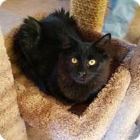 Adopt A Pet :: Turbo - Raritan, NJ