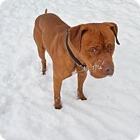 Adopt A Pet :: Mongo - Buena Vista, CO
