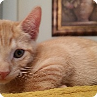 Adopt A Pet :: Tigger - Houston, TX