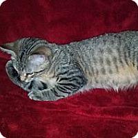 Adopt A Pet :: Josh - Simpsonville, SC