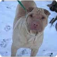 Adopt A Pet :: Sedona - Bethesda, MD