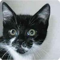Adopt A Pet :: Razzy - Brea, CA