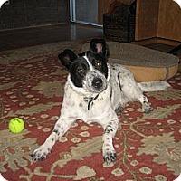 Adopt A Pet :: Claire - Adoption Pending - Phoenix, AZ