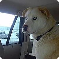 Adopt A Pet :: Koda - Morgantown, WV