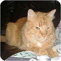 Adopt A Pet :: Sony - Phoenix, AZ