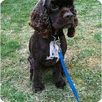 Adopt A Pet :: Rufie - Tacoma, WA