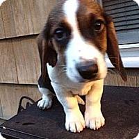 Adopt A Pet :: Elmer T Lee - Staunton, VA