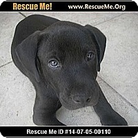 Adopt A Pet :: peanut - hollywood, FL