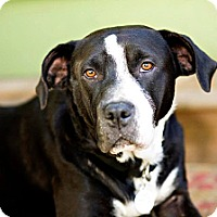 Adopt A Pet :: Angel - Eugene, OR