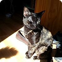 Adopt A Pet :: Kayla - Portland, ME