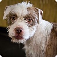 Adopt A Pet :: Diesel - Orange, CA
