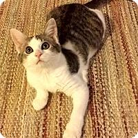 Adopt A Pet :: Wanda - Edmond, OK