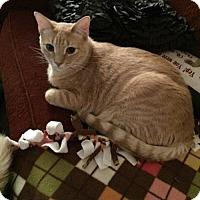 Adopt A Pet :: Rasha - San Antonio, TX
