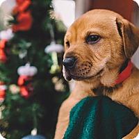 Adopt A Pet :: Genny - Gadsden, AL