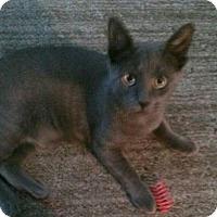 Adopt A Pet :: Blake - Ridgewood, NY