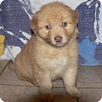 Adopt A Pet :: Beckham - New Oxford, PA