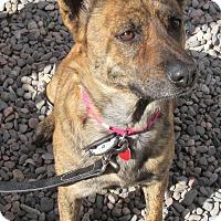 Adopt A Pet :: MORENO - Phoenix, AZ