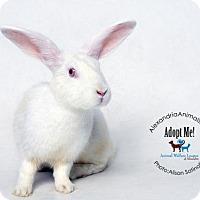 Adopt A Pet :: Nivens - Alexandria, VA