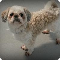 Adopt A Pet :: Gizmo - Muskegon, MI