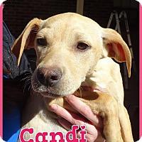 Adopt A Pet :: Candi meet me 4/8 - Manchester, CT